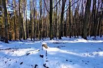 Procházka po lese v Opavě-Podvihově.