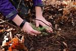 Kup plátěnku, zasaď strom! Adam Demo vymyslel projekt, který vrací stromy do moravskoslezských lesů.
