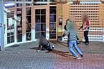 Záběr z kamery incidentu, který se odehrál koncem loňského roku v Ostravě.