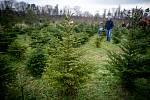 Plantáž vánočních stromků ve Vratimově. Ilustrační foto.