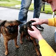 Pojízdná veterina v Ostravě
