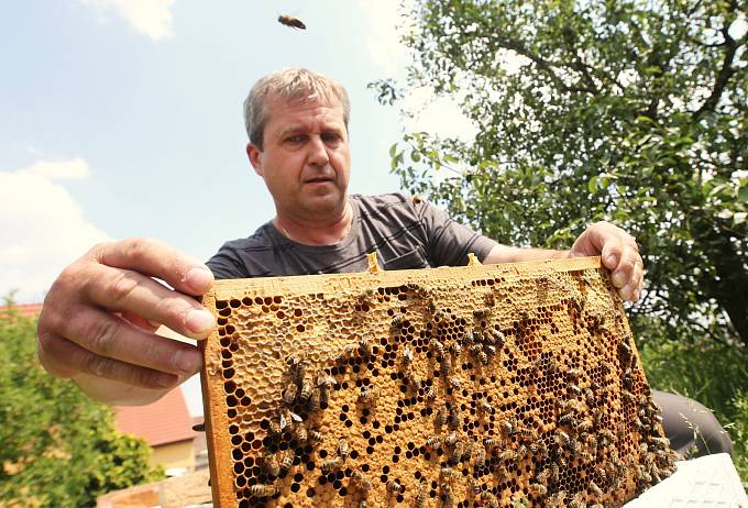 Včelaři - Ilustrační foto.