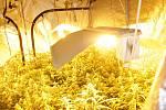Policie rozprášila marihuanový gang, zajistila i Fénixovy slzy.