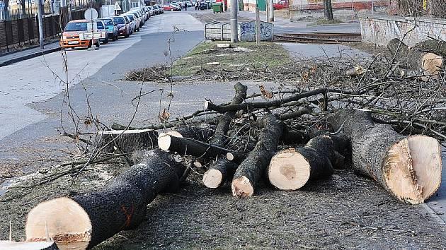 Pokácené stromy kvůli připravované výstavbě takzvané Prodloužené Porážkové, která přivede dopravu na území Nové Karoliny.