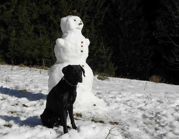 Sněhulák sčtyřnohým přítelem aneb Černý hlídá bílého