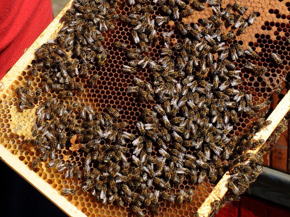 Příliš mnoho rostlin, které konzumujeme buď my, nebo naše hospodářská zvířata, se při své reprodukci spoléhají na živočišné opylovače – tedy na čmeláky a včely.