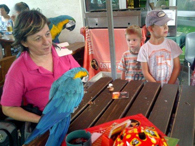 Chovatelka Jarmila Boogová se svými papoušky.