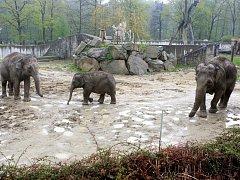 Sloni v ostravské zoo. Ilustrační foto.