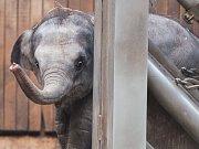 Malá slonice z ostravské ZOO.