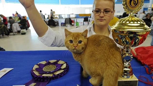V Ostravě se konal první ročník mezinárodní výstavy britských koček