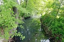 Mlýnská strouha v Ostravě-Proskovicích by se vyčištění a zvýšení průtoku mohla dočkat příští rok.