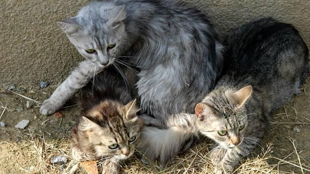 Kočky, které exekutoři vyhodili oknem na ulici