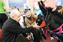 Oslík Karlík udělal seniorům v Novém Jičíně velkou radost.