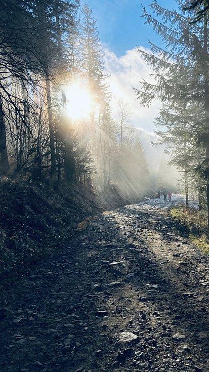 Slunce prosvítá skrze stromy při výšlapu na Lysou horu objektivem Filipa Szkuty.