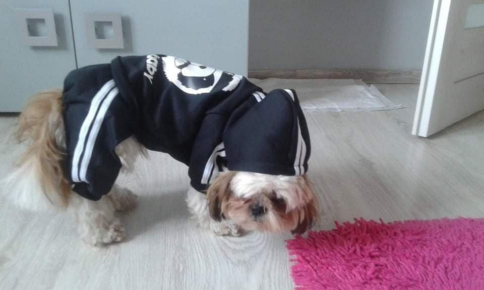 Jolana Zářická z Těrlicka takto obléká psa Maxíka.