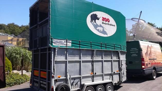 Transportní přívěs ve kterém byla převezena mladá žirafa do Zoo Ostrava