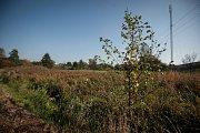 Na zapleveleném pozemku v Bartovicích usídlila divoká prasata.