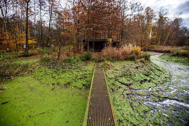 Kouzelný podzim a výlov rybníka vostravské zoo, 16.listopad 2019.