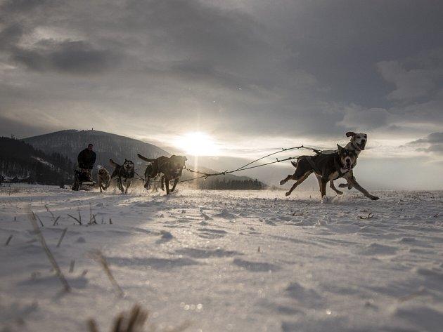 Jako na Aljašce si museli připadat lidé, kteří v sobotu navštívili Bordovice na Novojičínsku, kde se konaly závody psích spřežení.