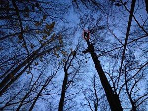 Záchrana paraglidisty zvysokého stromu.
