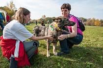 Den psích nadějí v Ostravě-Porubě.