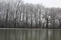Zamrzlá potemnělá oblast Třemešských rybníků.