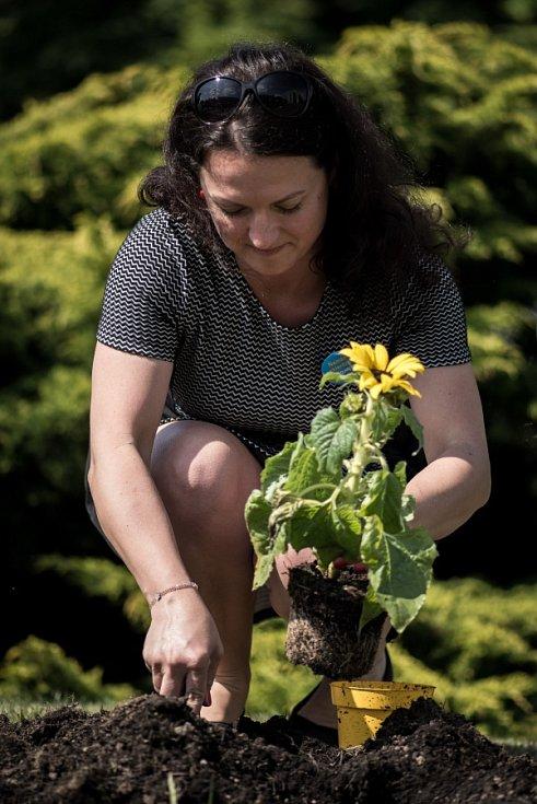 Vysazením rozkvetlých slunečnic, například i na záhonu před budovou Sanatorií Klimkovice, lidé vyjádřili sounáležitost s pacienty trpícími roztroušenou sklerózou.