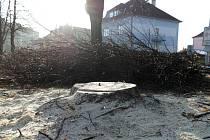 Pozůstatky po vykácených stromech, které byly v sadu Družby vysazeny v roce 1982.