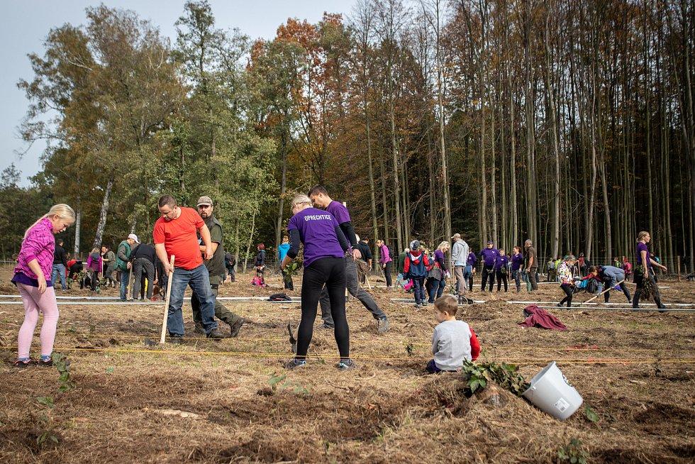 Ilustrační foto z akce Sázíme lesy nové generace, která se uskutečnila 19. řina 2019 v Šilheřovicích.