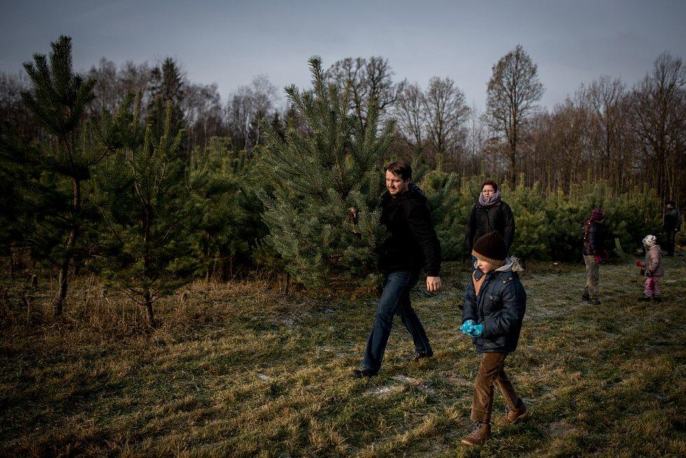 Smrk, jedle či borovice? Na vratimovské plantáži od prvního prosince prodávají vánoční stromky. Můžete si je tady sami nejen vybrat, ale také uřezat, nebo případně vyrýt i s kořeny a po svátcích opět vrátit do země.