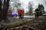 Hasiči odstraňovali spadlý strom u Slezskoostravského hradu, 10. února 2020 v Ostravě.