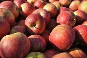 Ovocnáři: Loňský superúrodný rok se opakovat nebude.