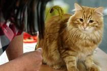 Výstava koček v Gongu.