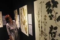 VÝSTAVU o léčivých rostlinách doplňují i krásné herbáře.
