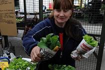 Konec dubna a květen patří mezi období, kdy tržnice zaplavují prodejci květin, sazeniček různých druhů zeleniny a bylinek.