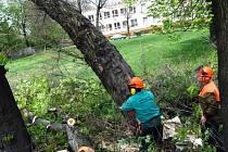 Kácení stromů na budoucím staveništi prodloužené Místecké