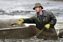 K prvnímu letošnímu výlovu na Jistebnicku se rybáři sešli ve středu ráno, a to na rybníku přezdívaném Prosňák.