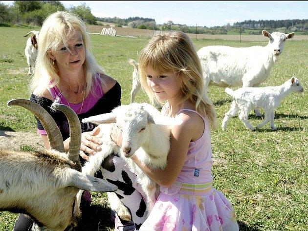 KOUKEJ, KOZIČKY. Lidé si rádi pohladí ovci, kozu nebo krávu, ale že by se třeba chtěli naučit dojit, to je zcela výjimečné, shodují se farmáři, kteří provozují agroturistiku.