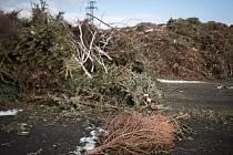 Vánoční stromky od obyvatel ostravských sídlišť končí v městské kompostárně OZO v Hrušově.