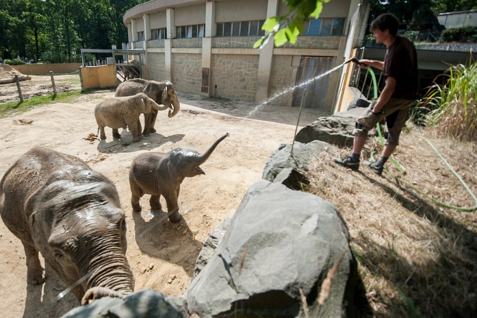 Sprcha pro slony v ostravské zoo je jedním z možných druhů ochlazení, které si mohou zvířata dopřát.