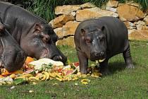 Ostravská zoologická zahrada chystá o víkendu oslavu. Ilustrační foto.