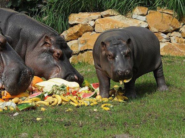Ostravská zoologická zahrada chystá ovíkendu. Ilustrační foto.