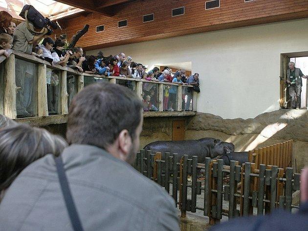 V zoo se loučili s hrochem Hubertem