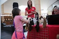 V ostravském Avionu lidé darovali vlasy pro onkologicky nemocné