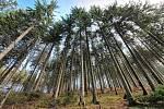 Zástup velkolepých stromů od Davida Medvidi.