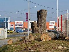 Až do konce vegetačního klidu, tedy do konce března, budou ostravské obvody provádět pravidelnou údržbu zeleně. V mnoha případech dochází i ke kácení stromů, vždy ale jen s povolením.