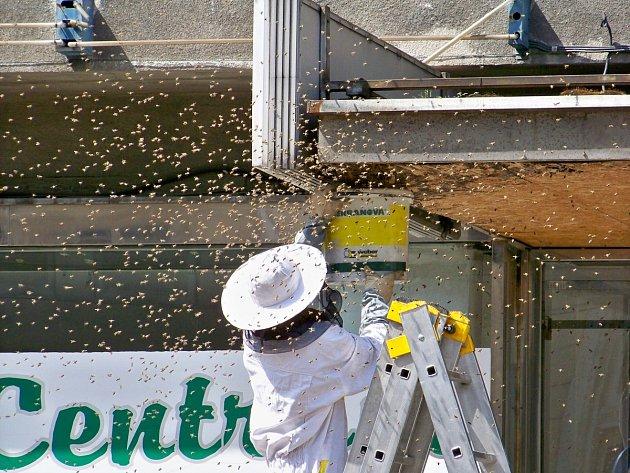 Stovky včel vcentru Ostravy zaměstnaly strážníky ihasiče.