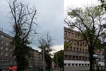 V neděli budou kácet uschlé lípy v centru Ostravy.