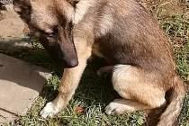 Nalezené štěně.