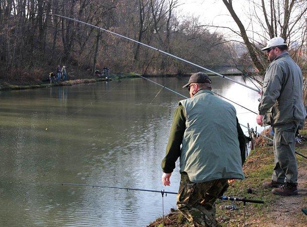 Záběry z rybářských závodů na rybnících Pod Bedřiškou v Ostravě-Nové Vsi, které zahájily letošní rybářskou sezónu